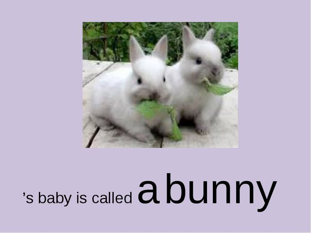 's baby is called a bunny