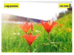 сардаана лилия