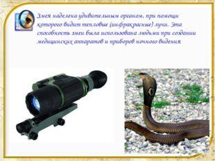 Змея наделена удивительным органом, при помощи которого видит тепловые (инфра