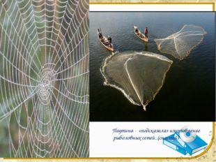 Паутина - «подсказала» изготовление рыболовных сетей. (снастей)