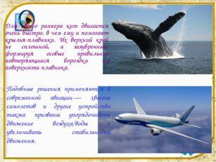 Для своего размера кит двигается очень быстро, в чем ему и помогают крылья-пл