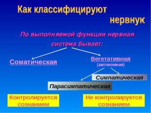 По выполняемой функции нервная система бывает: Вегетативная (автономная) Сома