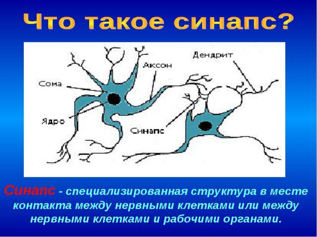 Синапс - специализированная структура в месте контакта между нервными клеткам...