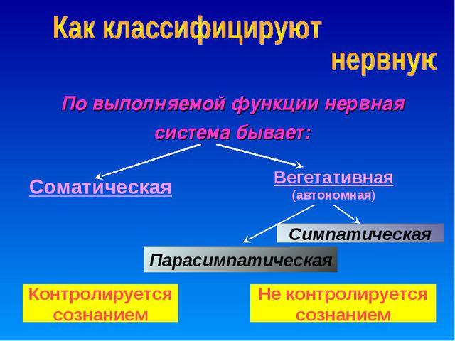 По выполняемой функции нервная система бывает: Вегетативная (автономная) Сома...