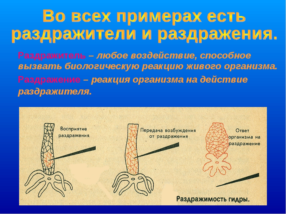 Раздражитель – любое воздействие, способное вызвать биологическую реакцию жи...