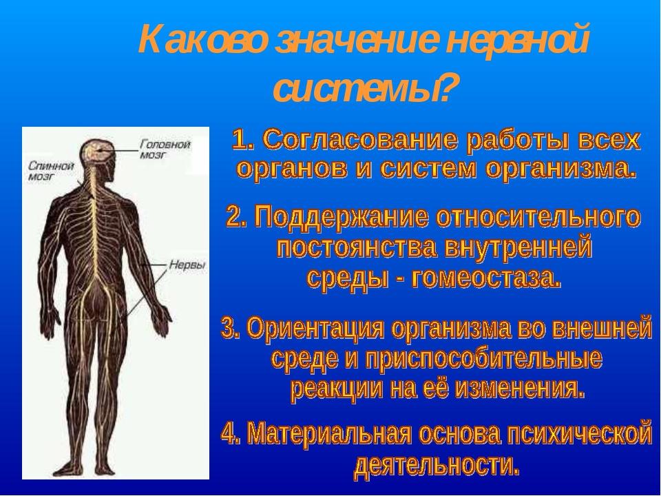 Каково значение нервной системы?