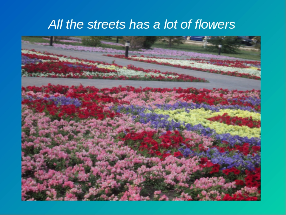 All the streets has a lot of flowers