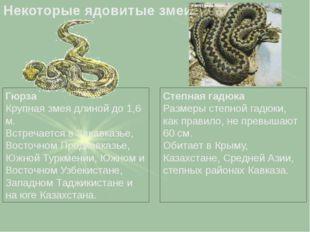 Гюрза Крупная змея длиной до 1,6 м. Встречается в Закавказье, Восточном Предк