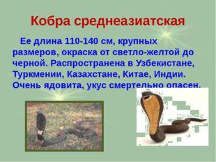 Кобра среднеазиатская Ее длина 110-140 см, крупных размеров, окраска от светл