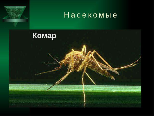 Насекомые Комар