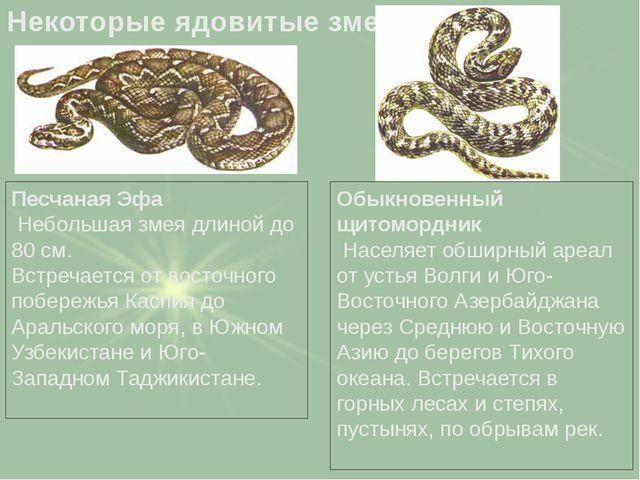 Песчаная Эфа Небольшая змея длиной до 80 см. Встречается от восточного побере...