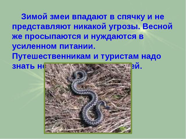 Зимой змеи впадают в спячку и не представляют никакой угрозы. Весной же прос...