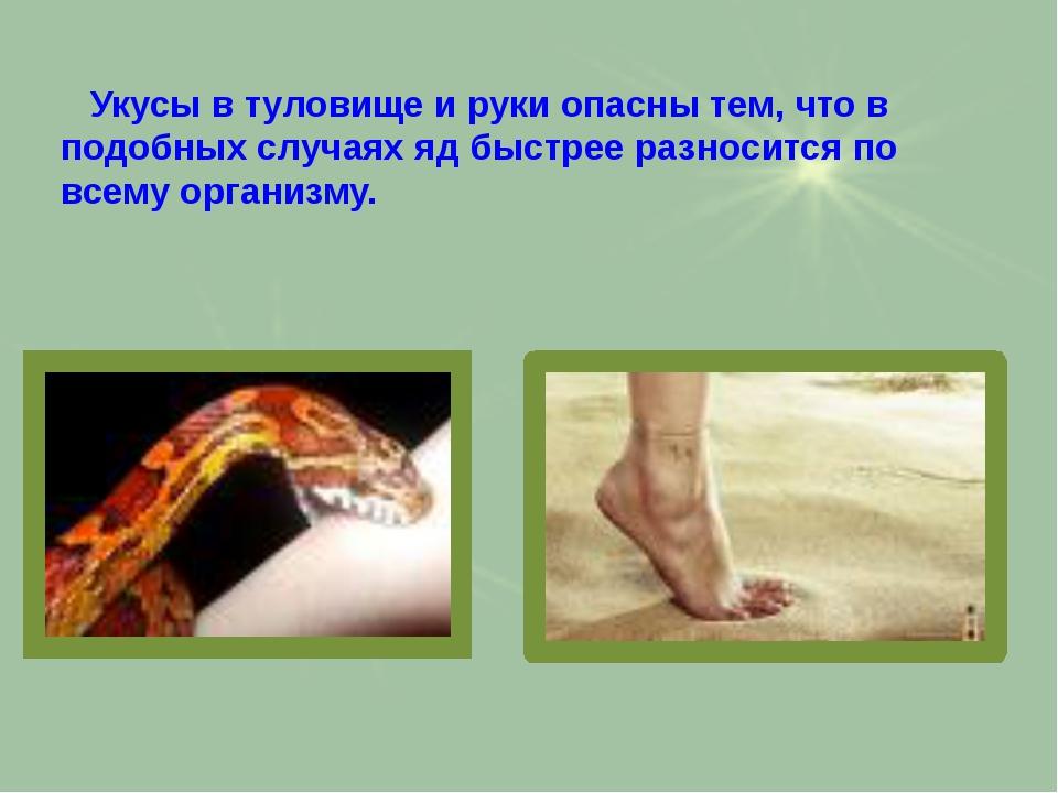 Ядовитые и неядовитые змеи Астраханской области