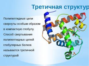 Третичная структура Полипептидные цепи свернуты особым образом в компактную г