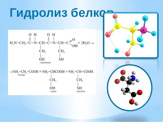 Гидролиз белков