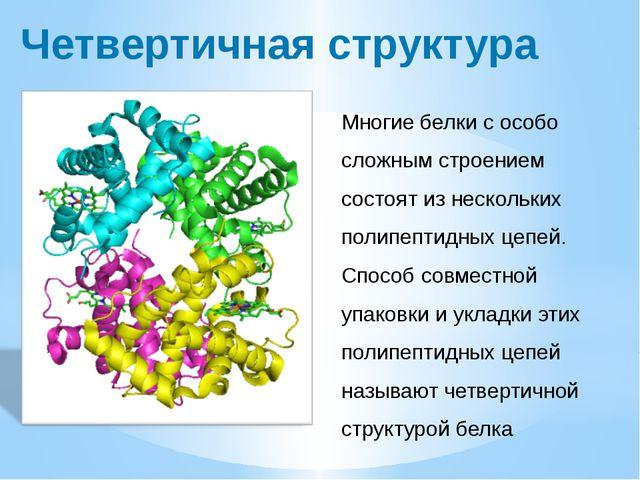 Четвертичная структура Многие белки с особо сложным строением состоят из неск...