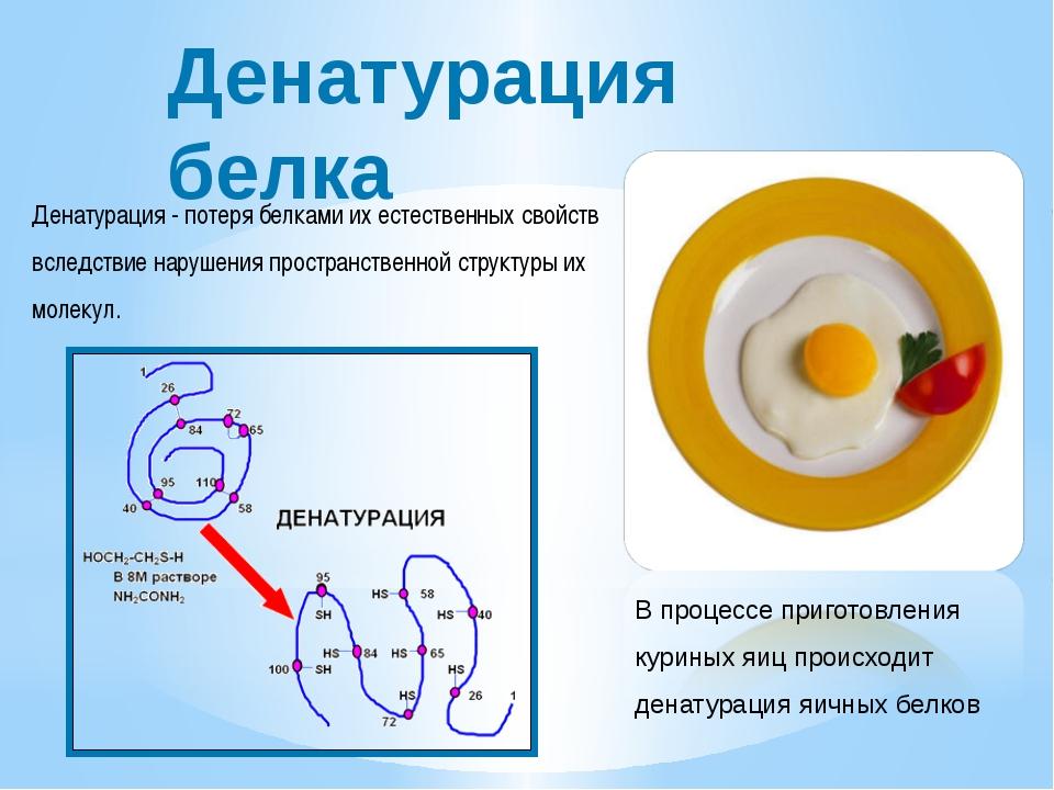 Денатурация белка Денатурация - потеря белками их естественных свойств вследс...