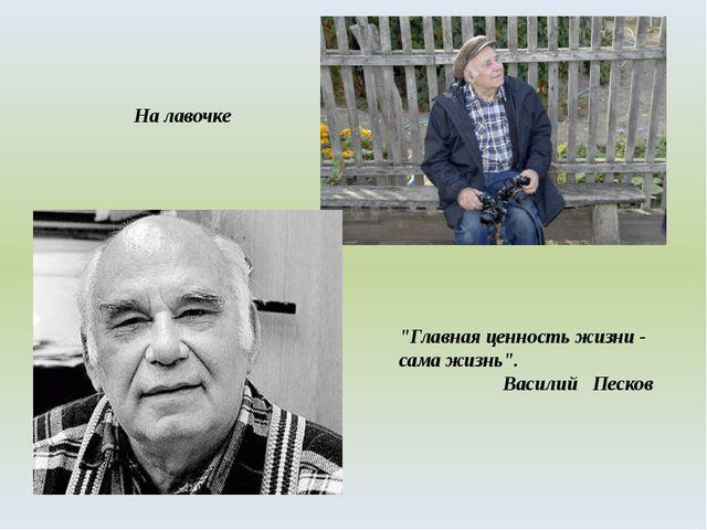 """На лавочке """"Главная ценность жизни - сама жизнь"""". Василий Песков"""