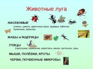 Животные луга НАСЕКОМЫЕ (пчёлы, шмели, цветочные мухи, муравьи, бабочки, Кузн