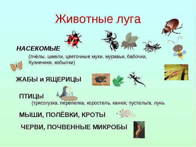 Животные луга НАСЕКОМЫЕ (пчёлы, шмели, цветочные мухи, муравьи, бабочки, Кузн...