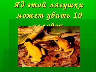 Яд этой лягушки может убить 10 человек.