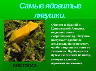 Самые ядовитые лягушки. Обитает в Южной и Центральной Америке, выделяет очень