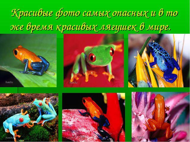 Красивые фото самых опасных и в то же время красивых лягушек в мире.