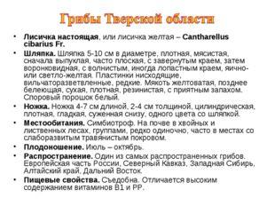 Лисичка настоящая, или лисичка желтая – Cantharellus cibarius Fr. Шляпка. Шля
