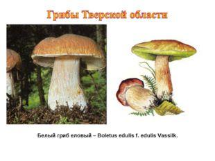Белый гриб еловый – Boletus edulis f. edulis Vassilk.