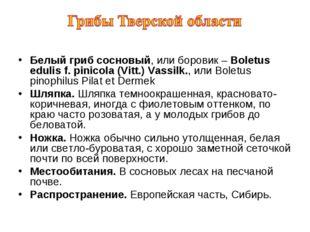 Белый гриб сосновый, или боровик – Boletus edulis f. pinicola (Vitt.) Vassilk