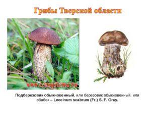 Подберезовик обыкновенный, или березовик обыкновенный, или обабок – Leccinum