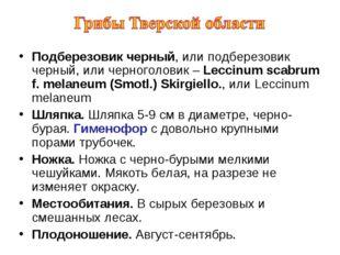 Подберезовик черный, или подберезовик черный, или черноголовик – Leccinum sca