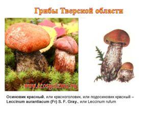 Осиновик красный, или красноголовик, или подосиновик красный – Leccinum auran
