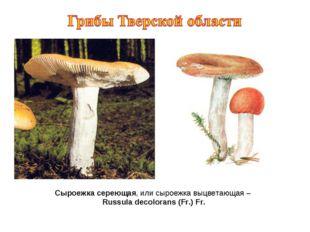 Сыроежка сереющая, или сыроежка выцветающая – Russula decolorans (Fr.) Fr.