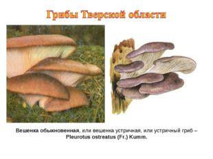 Вешенка обыкновенная, или вешенка устричная, или устричный гриб – Pleurotus o