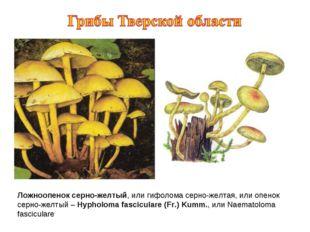 Ложноопенок серно-желтый, или гифолома серно-желтая, или опенок серно-желтый