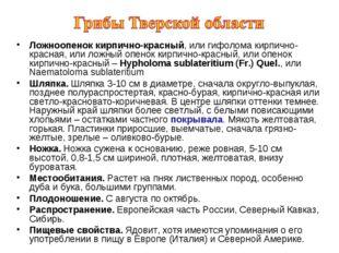 Ложноопенок кирпично-красный, или гифолома кирпично-красная, или ложный опено