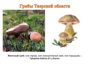 Желчный гриб, или горчак, или ложный белый гриб, или горькушка – Tylopilus fe