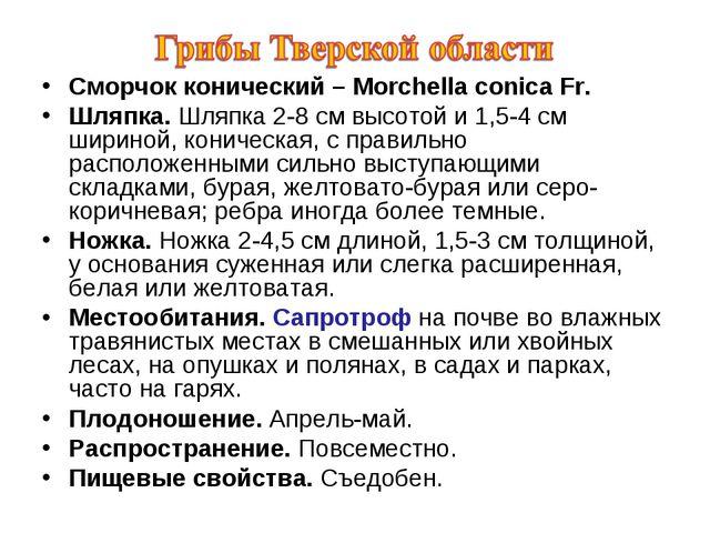 Сморчок конический – Morchella conica Fr. Шляпка. Шляпка 2-8 см высотой и 1,5...
