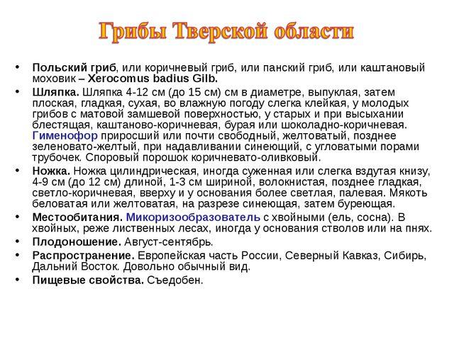 Польский гриб, или коричневый гриб, или панский гриб, или каштановый моховик...