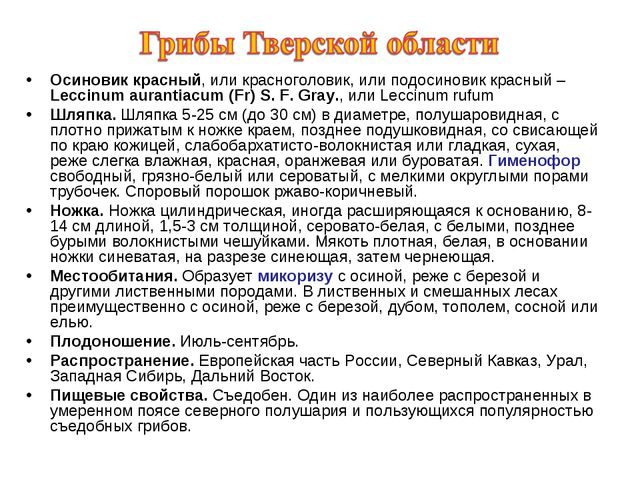 Осиновик красный, или красноголовик, или подосиновик красный – Leccinum auran...