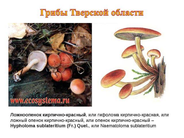 Ложноопенок кирпично-красный, или гифолома кирпично-красная, или ложный опено...