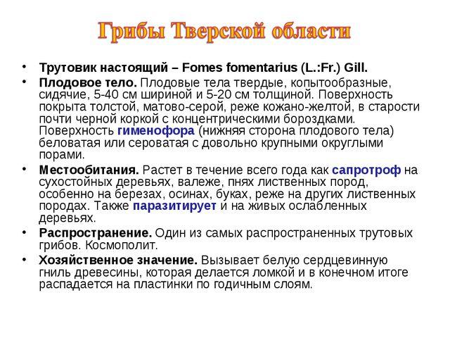 Трутовик настоящий – Fomes fomentarius (L.:Fr.) Gill. Плодовое тело. Плодовые...
