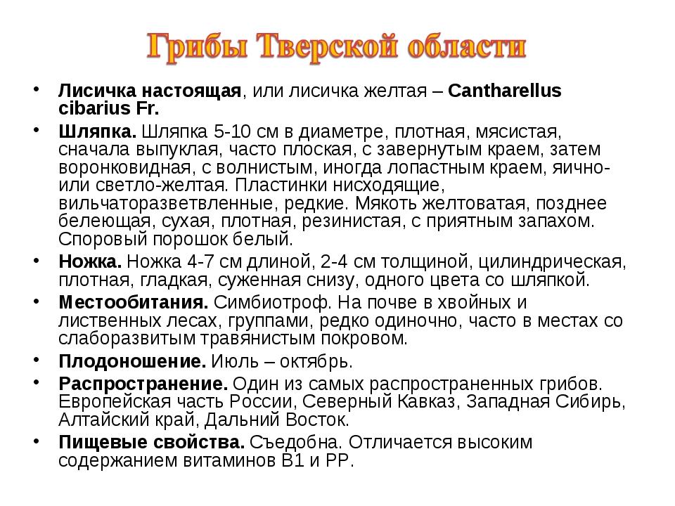 Лисичка настоящая, или лисичка желтая – Cantharellus cibarius Fr. Шляпка. Шля...