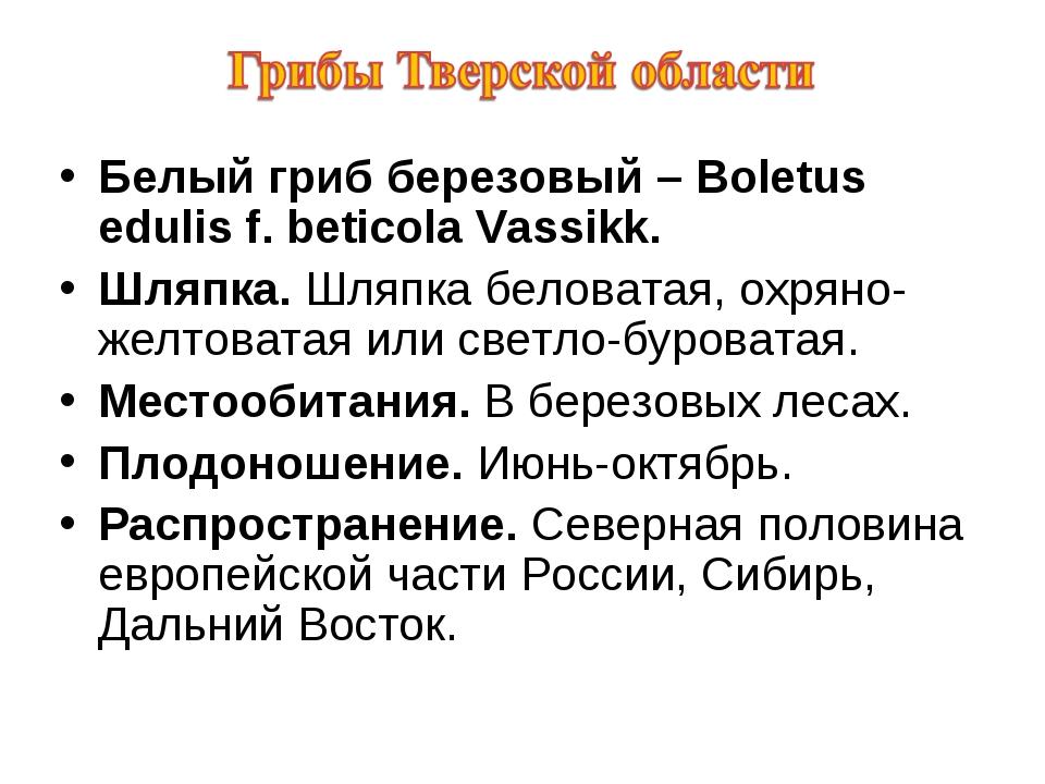 Белый гриб березовый – Boletus edulis f. beticola Vassikk. Шляпка. Шляпка бел...