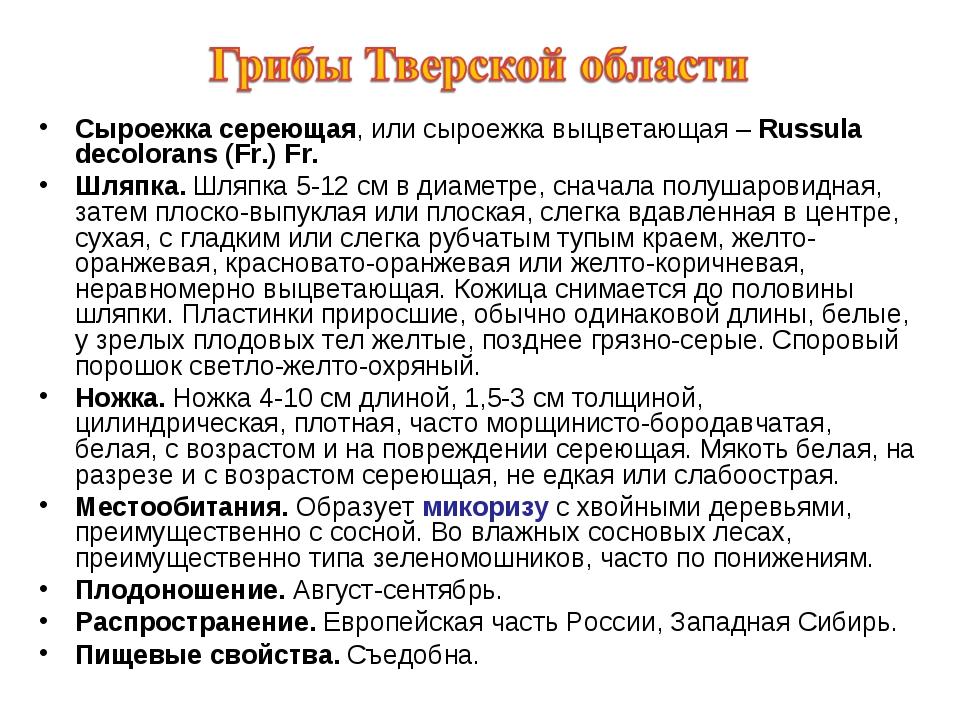 Сыроежка сереющая, или сыроежка выцветающая – Russula decolorans (Fr.) Fr. Шл...