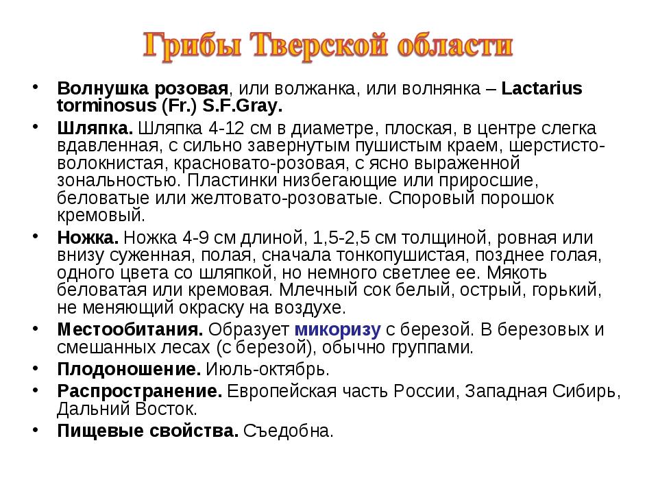 Волнушка розовая, или волжанка, или волнянка – Lactarius torminosus (Fr.) S.F...