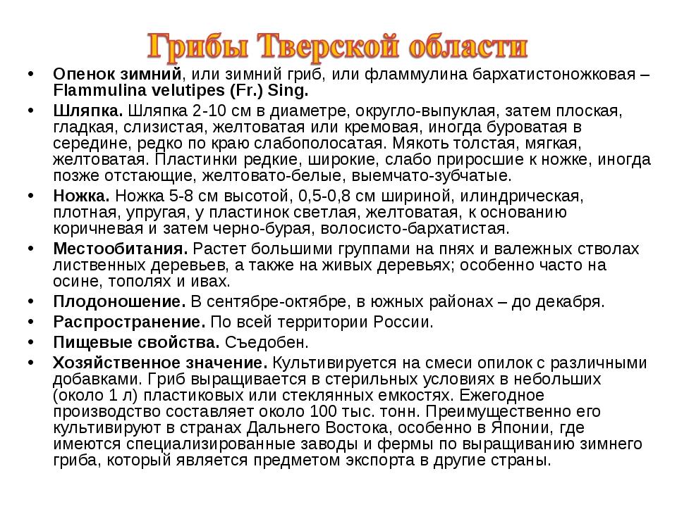 Опенок зимний, или зимний гриб, или фламмулина бархатистоножковая – Flammulin...