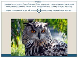 Филин— хищная птица отряда Совообразных. Одна из крупных сов уступающая разме