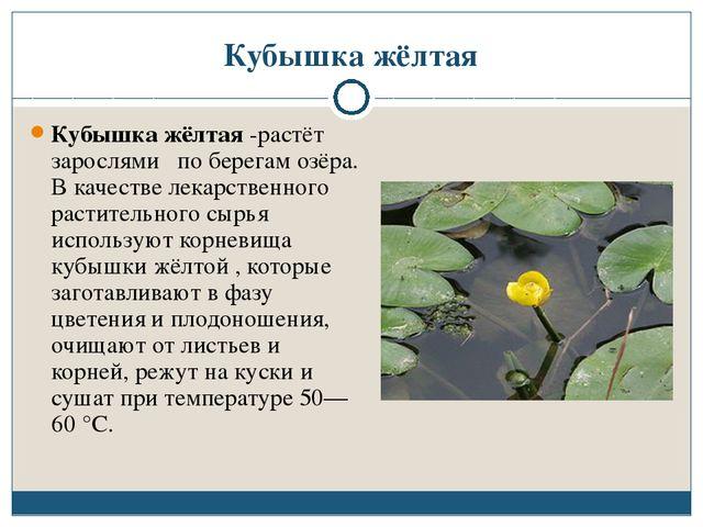 Кубышка жёлтая Кубышка жёлтая -растёт зарослями по берегам озёра. В качестве...